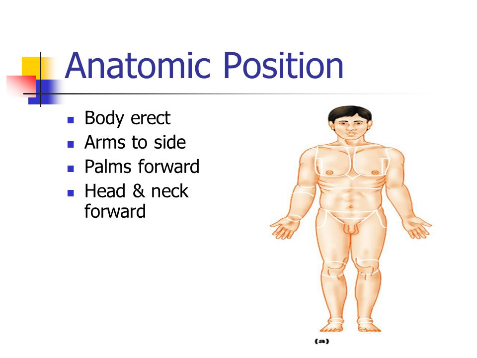 Anatomical Position  Directional Terms - ppt download