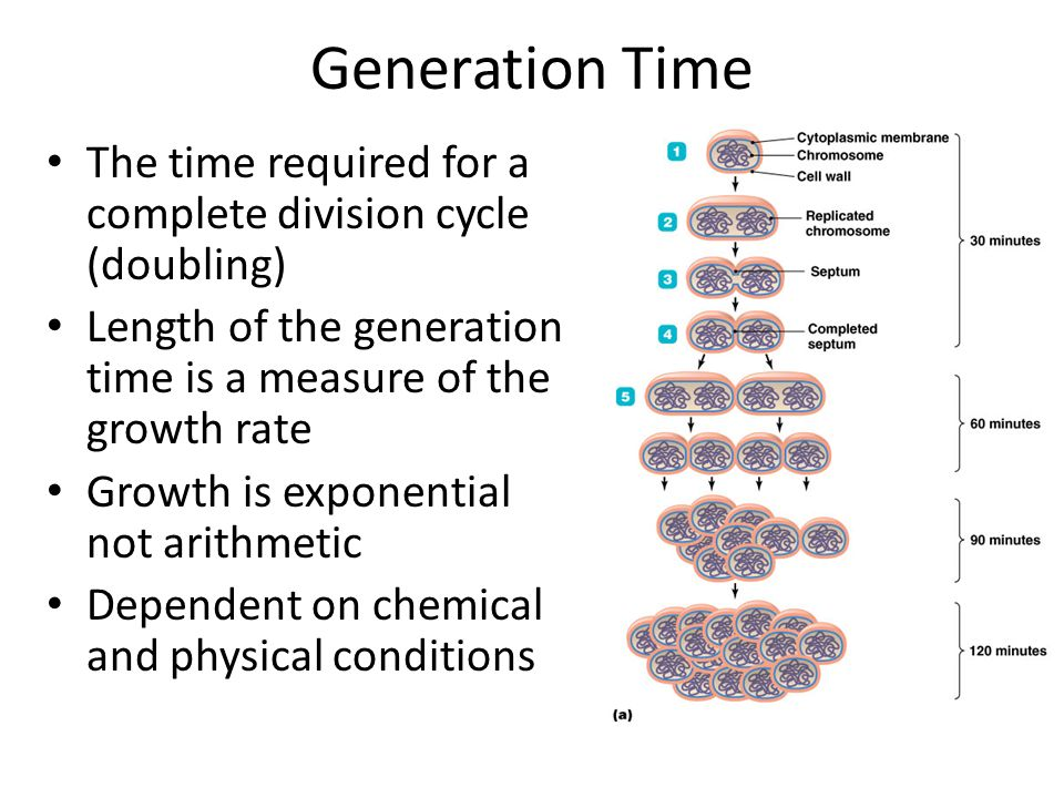 Elements of Microbial Growth, Nutrition and Environment - ppt video