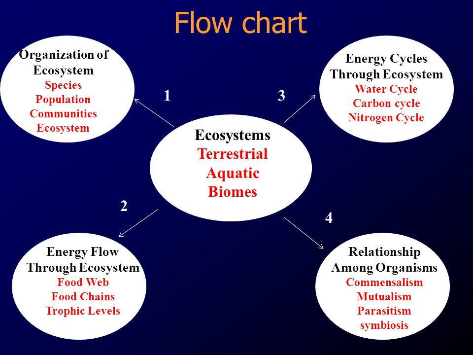 Ecosystem Model - ppt video online download