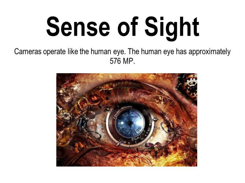 Large Of Sense Of Sight