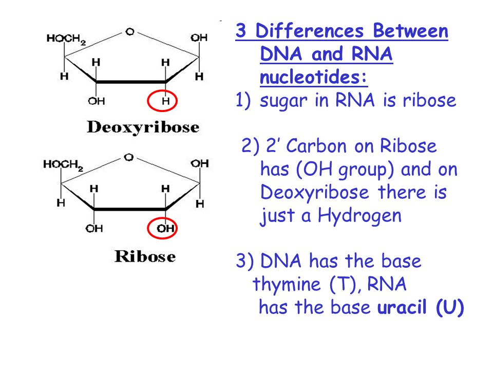 The Structure Of DNA And RNA - Ppt Video Online Downloaddna the