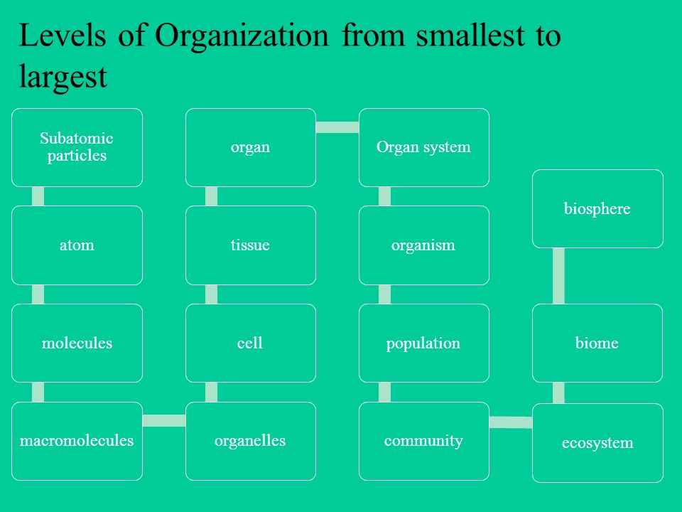 Levels of Organization from smallest to largest - ppt video online