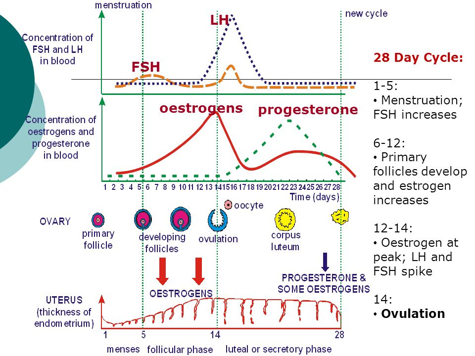 DJH Human reproduction - ppt video online download