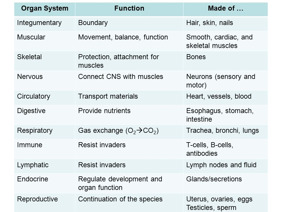 Introduction To Organ Systems Ppt Download