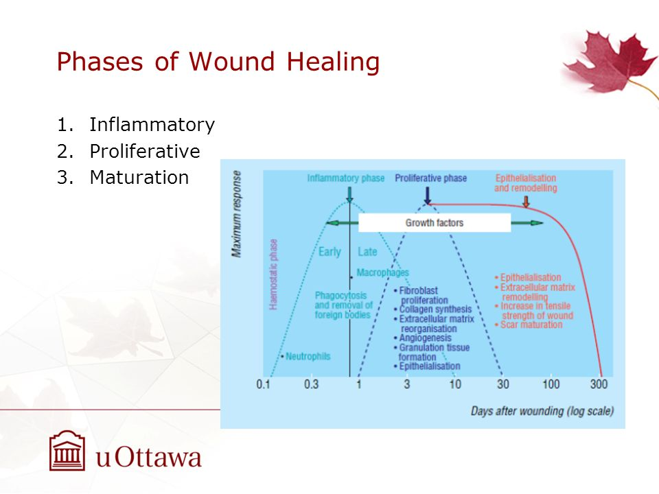 Wound Healing Natasha Holder MD, MSc, FRCSC - ppt download