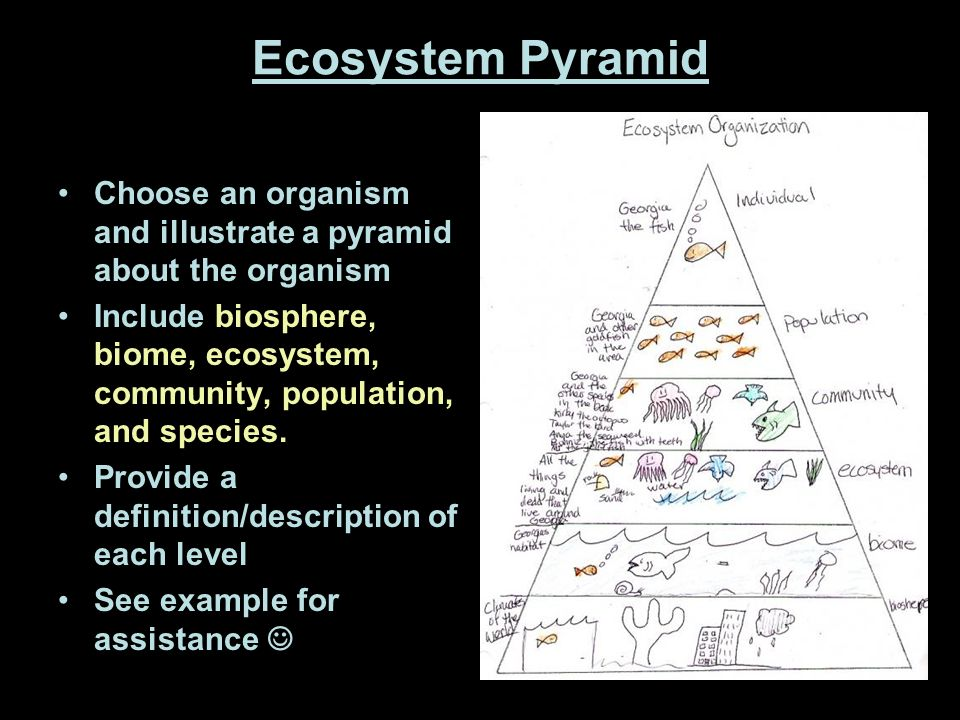 Ecological Hierarchy Individual organism Population Community - ppt