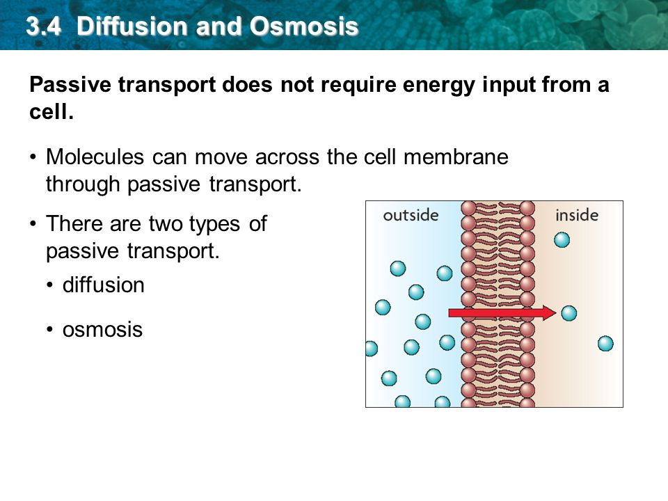I can describe passive transport - ppt video online download