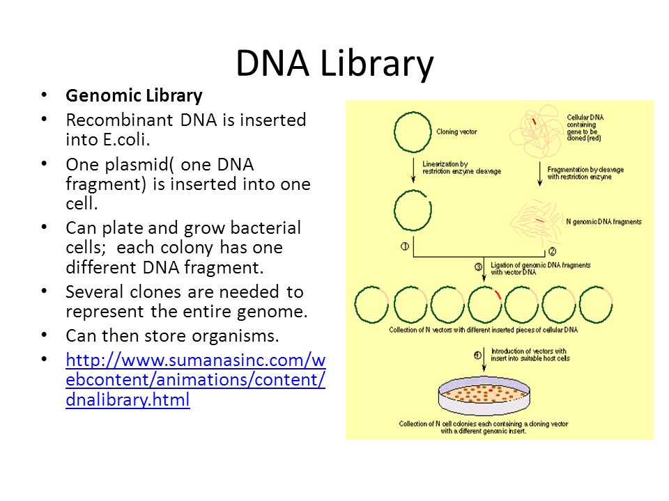 Lesson 2 Lecture Identification of clones of interest - ppt video
