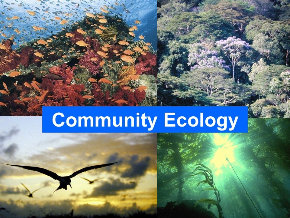 Community Ecology Please do not use the images in these PowerPoint