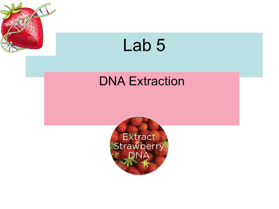 Lab 5 DNA Extraction - ppt video online download