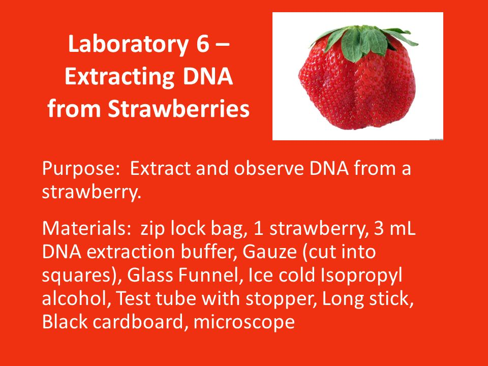Laboratory 6 \u2013 Extracting DNA from Strawberries - ppt video online