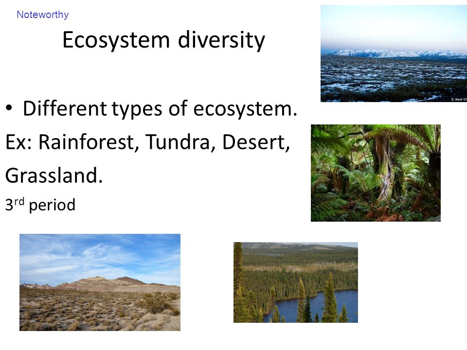 The number and variety of species living in an area - ppt video