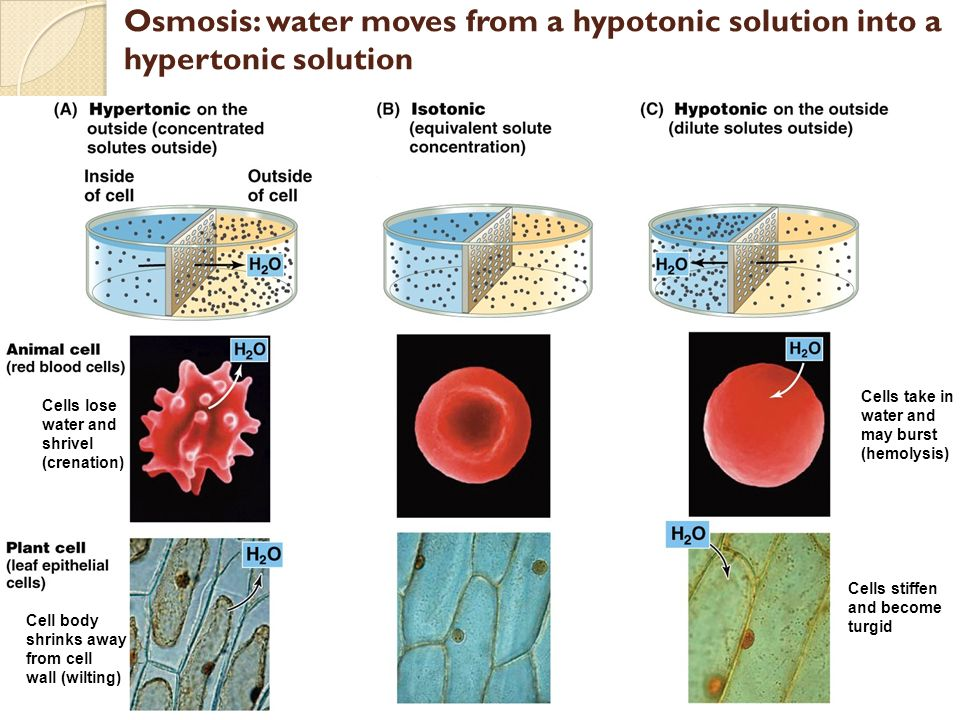 1/4) BR Osmosis review if a selectively permeable membrane