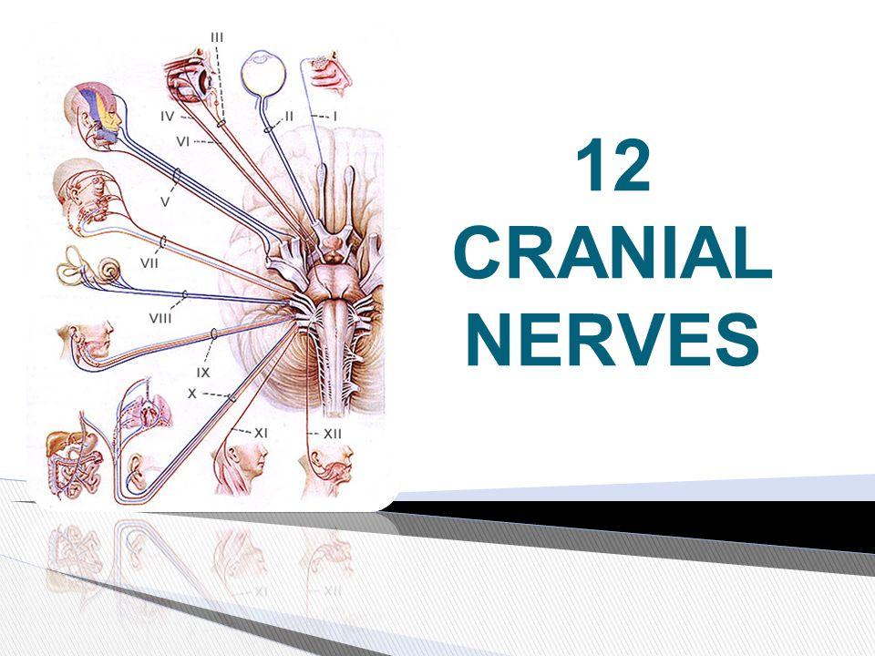 12 CRANIAL NERVES - ppt video online download