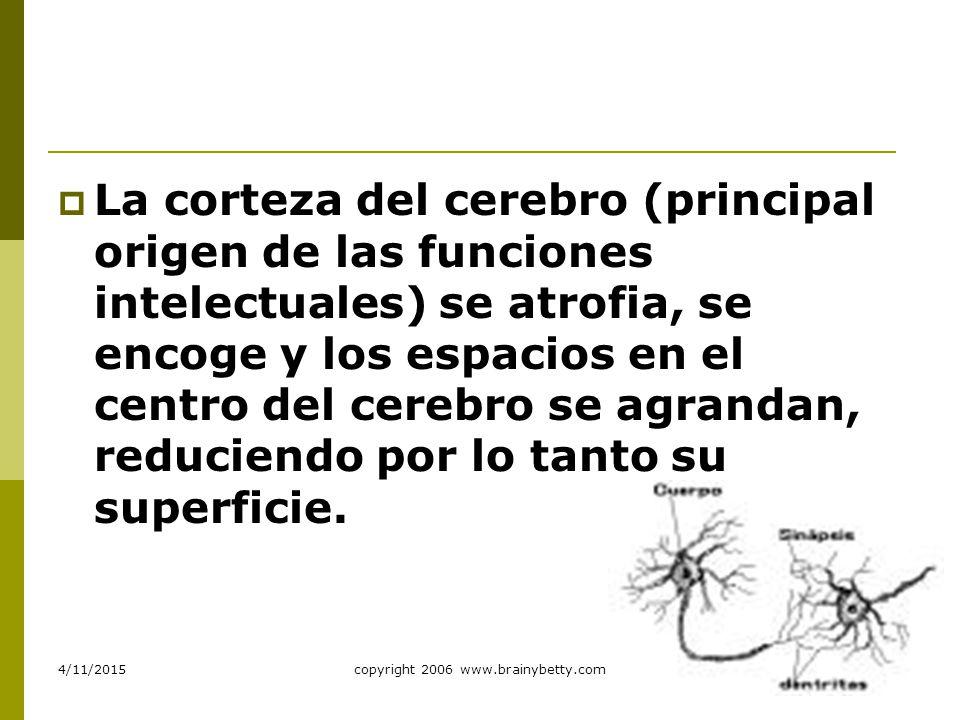 copyright 2006 bicycledesignercom