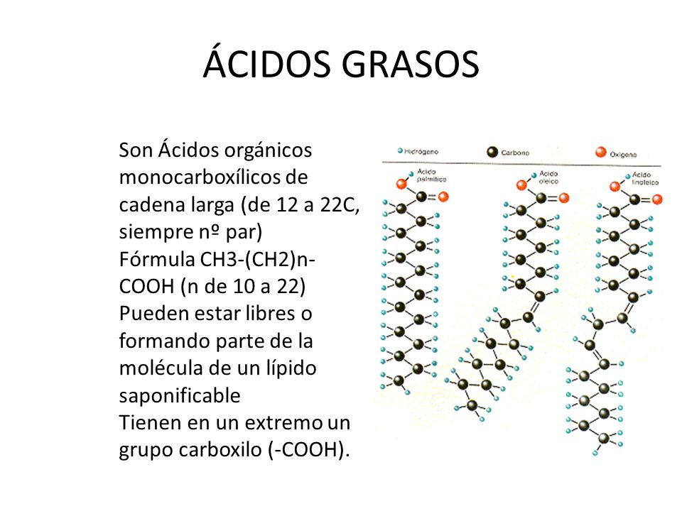 Acidos Grasos Libres Los LÍpidos. - Ppt Video Online Descargar