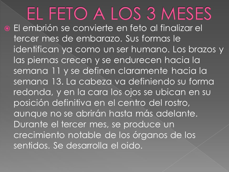Feto Al Mes Y Medio El Feto. - Ppt Video Online Descargar