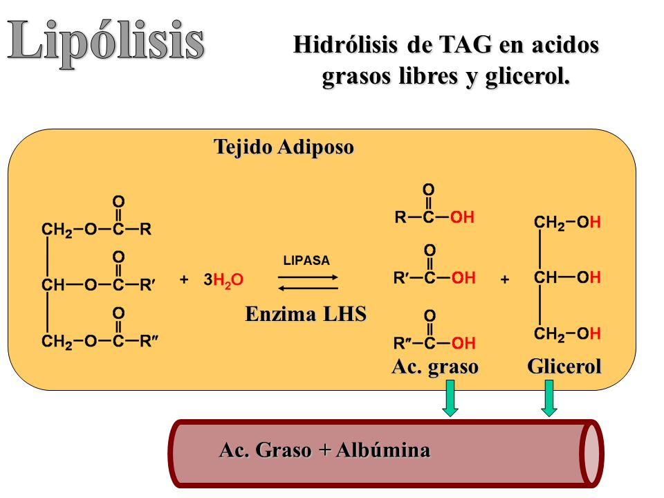 Acidos Grasos Libres Metabolismo De Lípidos - Ppt Video Online Descargar