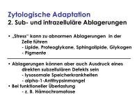 Zellschdigung und Adaptation - ppt video online herunterladen