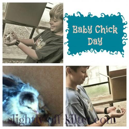 Slightly-off-kilter - Baby Chicks