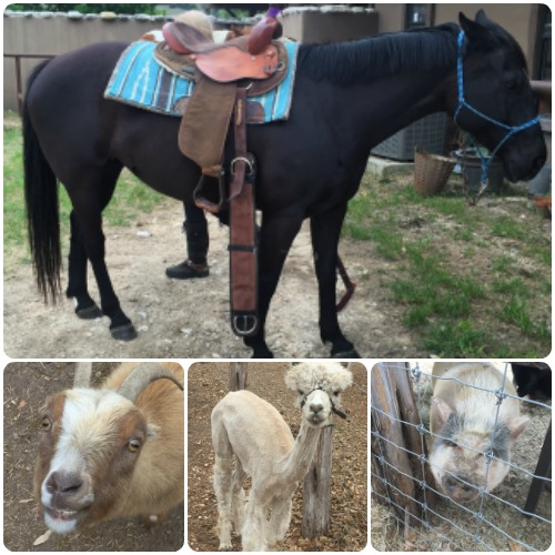 Horseback Riding and Jr Petting zoo
