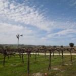 Vineyards on Bethel Road, Templeton, CA