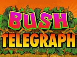 bush telegraph slot