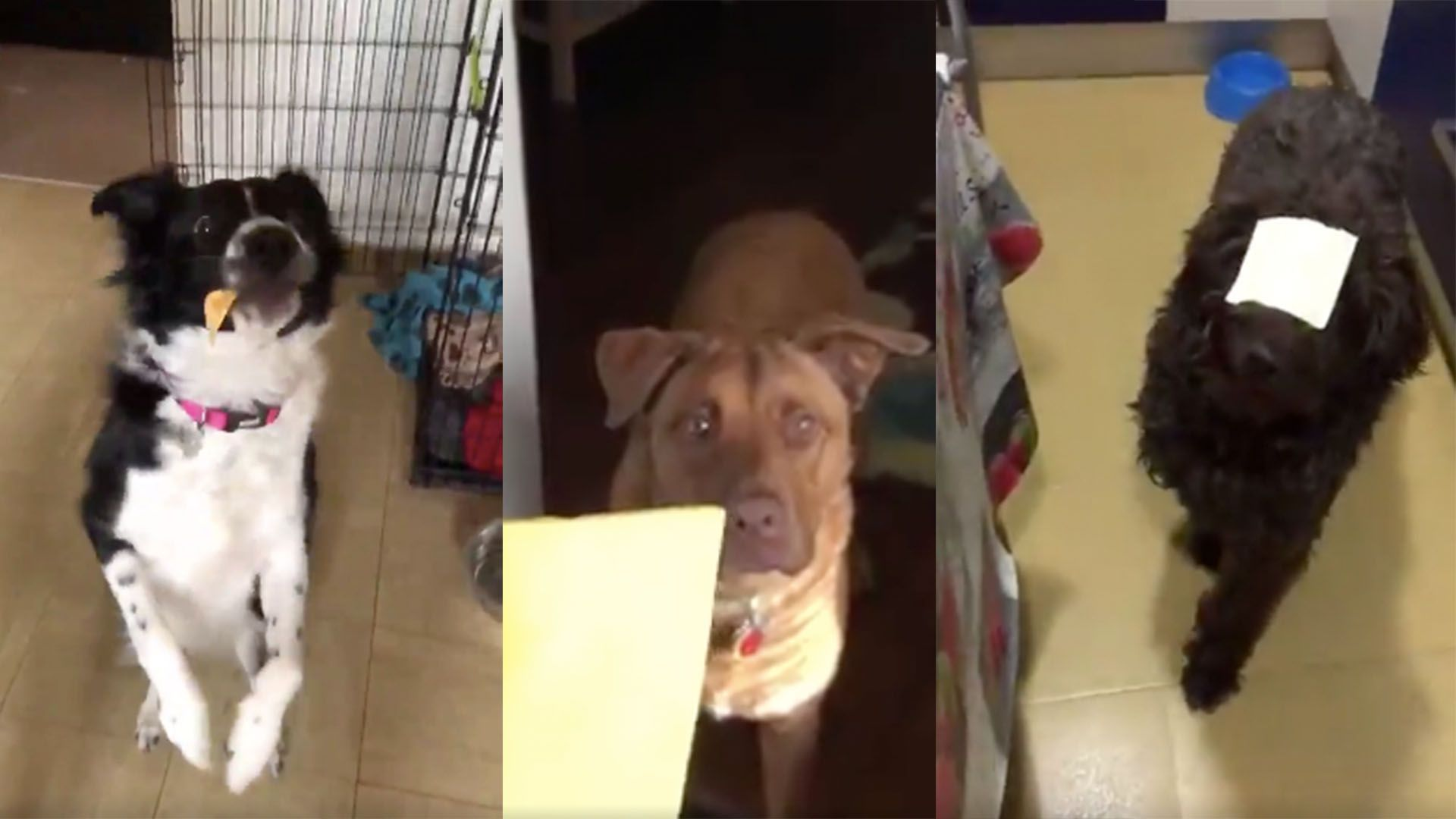 Animal Crush Watch These Adorable Dogs Absolutely Crush The Cheese Challenge