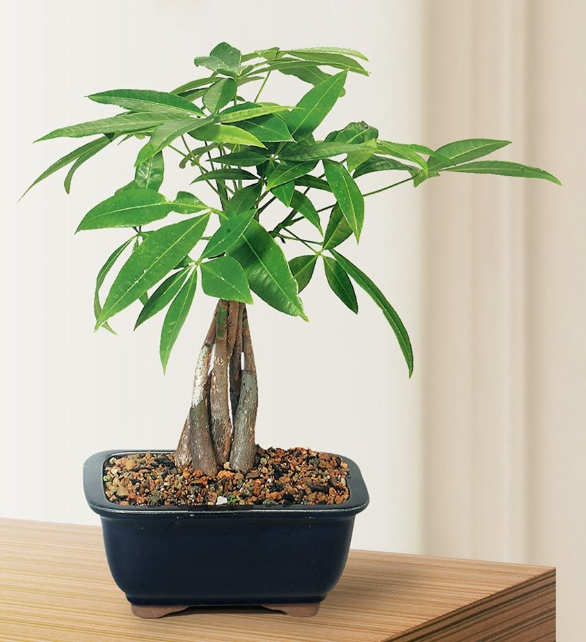 Indoor Plants For The Office 25 Office Plants That Fit On Your Desk Small Business Trends
