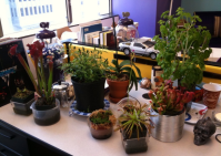 Easy to Care-for Office Plants that Help Fight the January ...