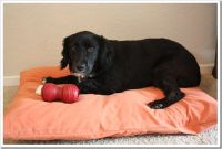 DIY Dog Bed Ideas - Great Home-made Dog Beds!