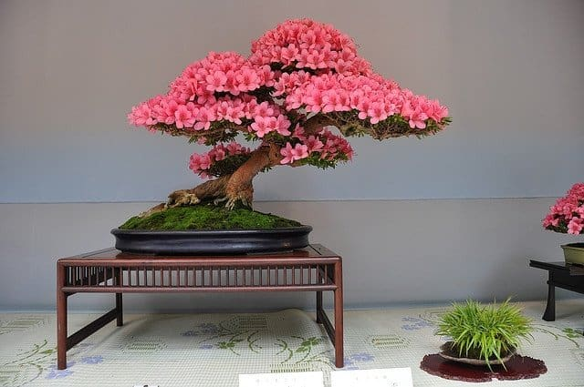 Indoor bonsai style ideas as home decor small garden ideas - Small trees for indoors ...