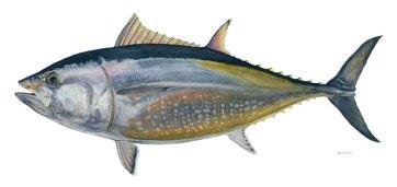 http://i0.wp.com/smartbeing.files.wordpress.com/2009/11/bluefin-tuna2.jpg?resize=362%2C171