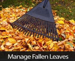 How To Manage Those Fallen Leaves