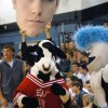 The Lancer mascot and sophomore Joey Wentz's head watch as the Chic-fil-A cow dances. Photo by James Wooldridge