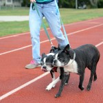 Freshman Mia Justice walks her dogs around the track. Photo by Morgan Browning