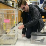 Senior Lars Troutwine transports the bird being used in Environmental Ed. Photo by Ty Browning