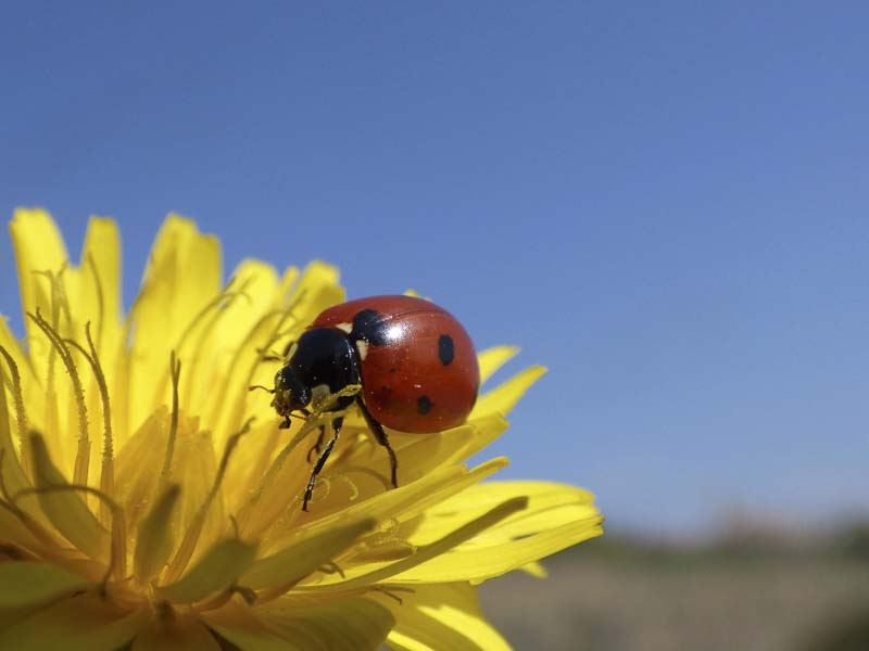 Learn About Ladybugs Science Lesson + Project