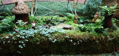 Medium Of Containers For Fairy Gardens