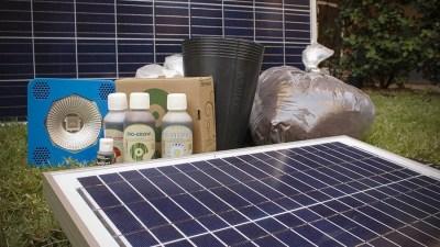 cultivo-a-luz-solar-a-sustentabilidade-chegou-ao-cultivo-de-maconha