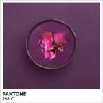 Pantone-5.jpg