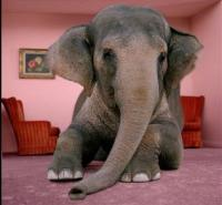 The Elephant in the Living Room? | Tobacco Harm Reduction ...