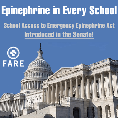 epinephrine act Adrenaline is a hormone released from the adrenal glands and its major action, together with noradrenaline, is to prepare the body for 'fight or flight.