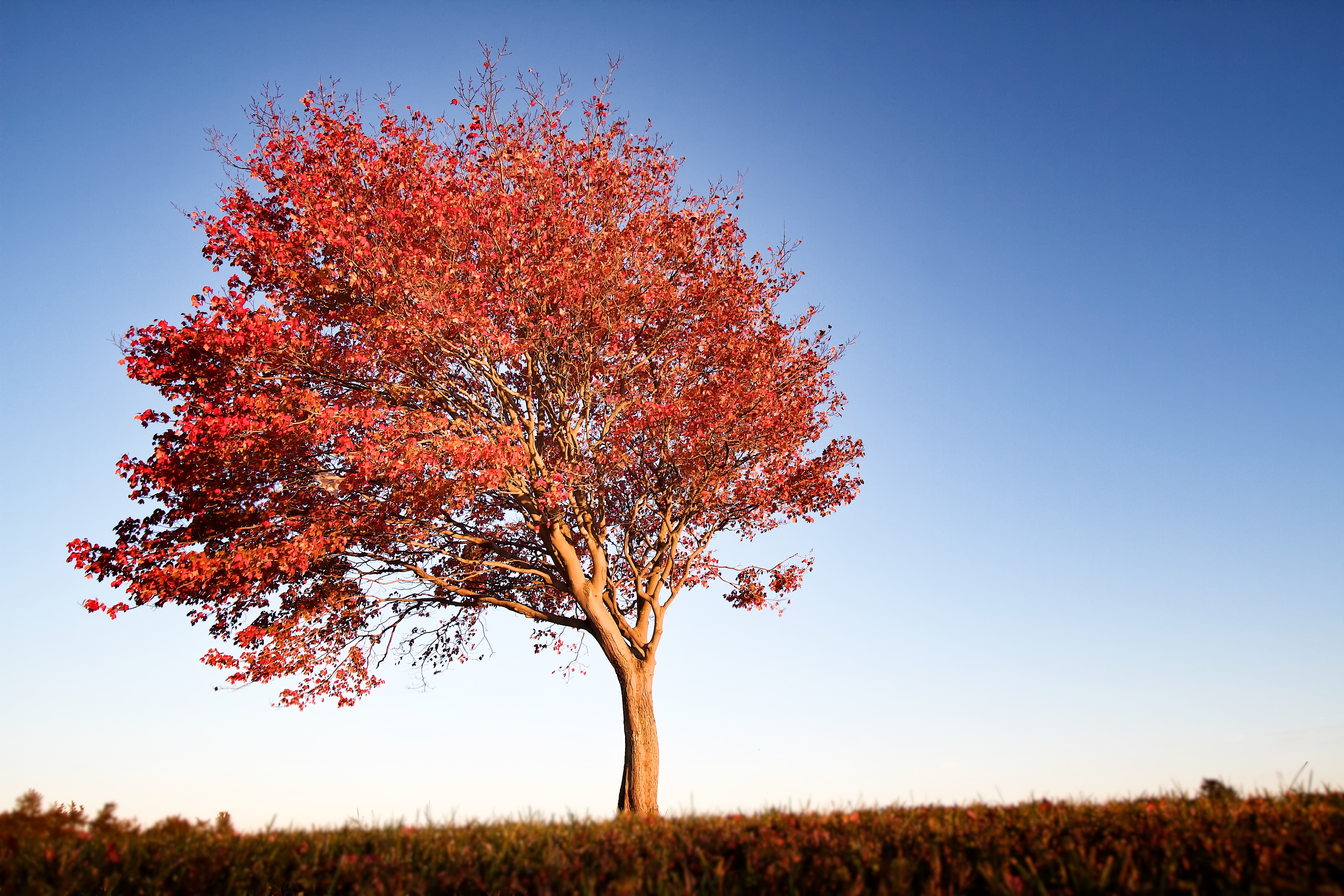 Fall Walk Wallpaper Lonely Red Tree Snapshots For Sore Eyes