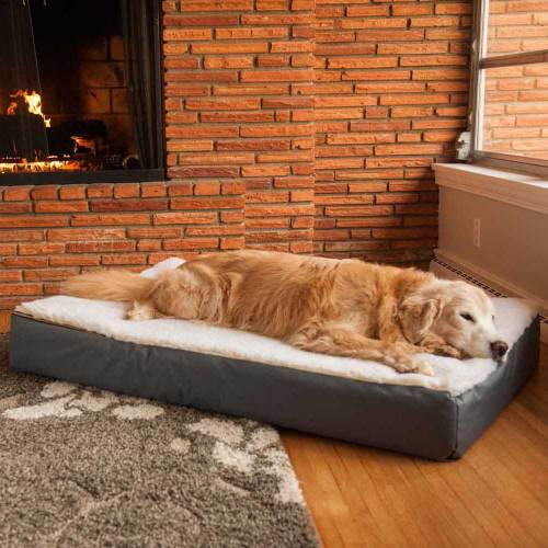 Medium Of Dog Beds Amazon