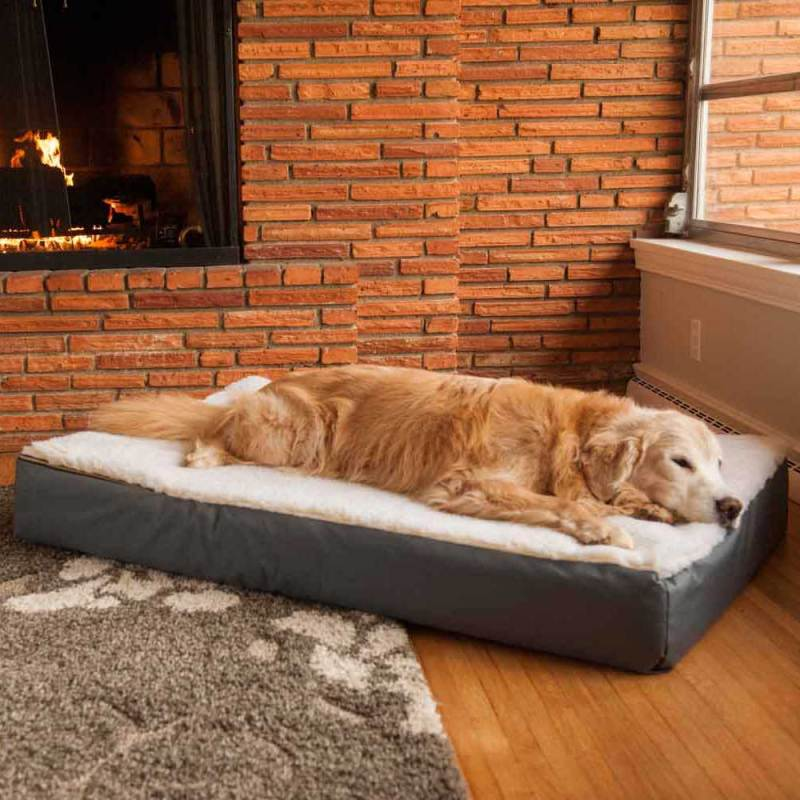 Large Of Dog Beds Amazon