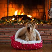 Snoozer Cozy Cave Dog Beds   Hooded Dog Beds   Cave ...