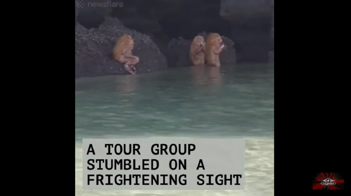 Were Ewok Like Creatures Called Chay Na Men Found Near A Cave In Thailand