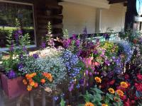 Bright Summer Window Box Flowers - Snow & Sons Landscaping