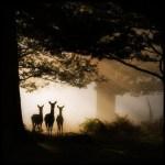 В природе всё пребывает в полном единстве со всем остальным